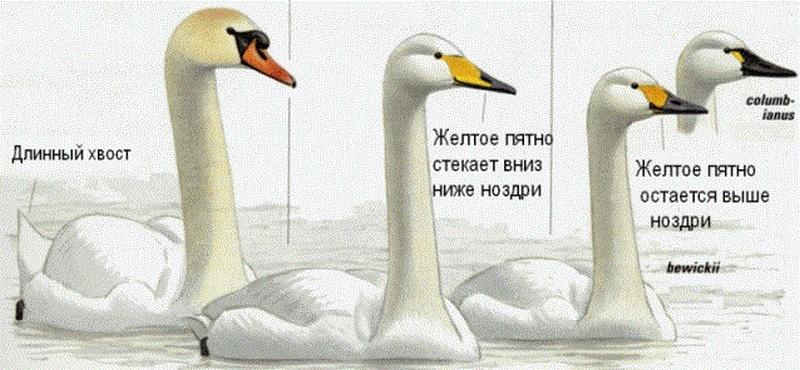 1_frg.jpg