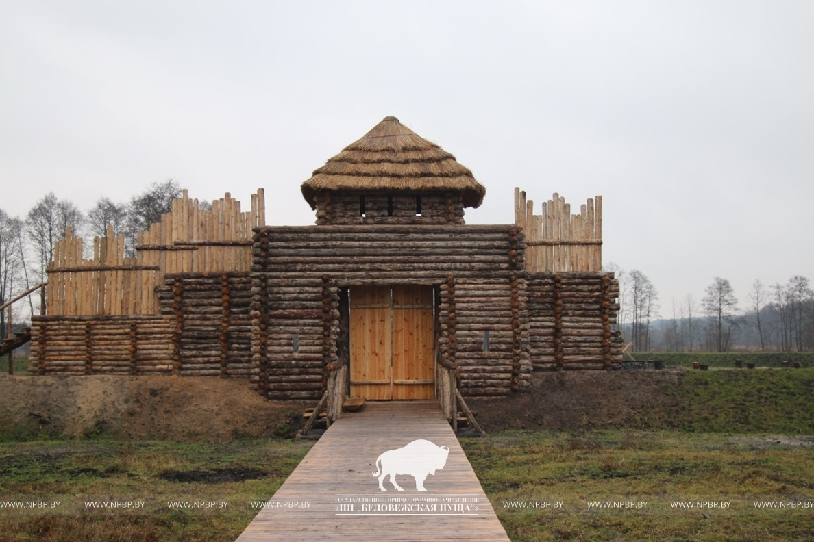 Как выглядит археологический музей под открытым небом, который строят в Беловежской пуще