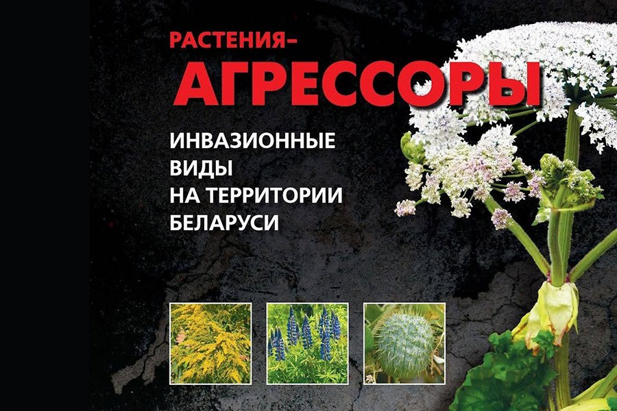 В Беловежской пуще начинается кампания против растений-пришельцев