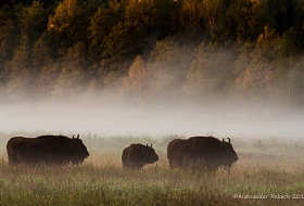 "Phototour ""World of wild nature"" - see the bison and stand still!"